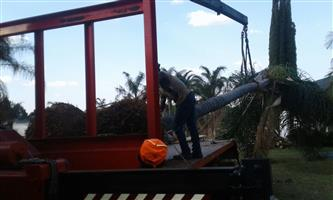 Dmike treefelling. Transplanting And tree removal