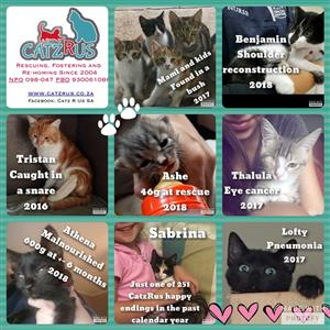 Adopt kittens and cats responsibly from CatzRus  - a registered rescue organisation
