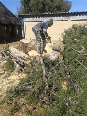 Tree Felling And Bush Clearing Services | Budget Tree Fellers