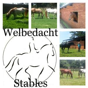 Welbedacht Stables - Stabling now available