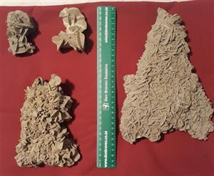 Desert rose mineral from Namibia