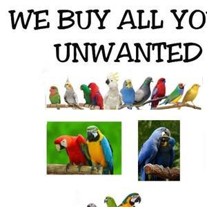 we buy all your unwanted birds