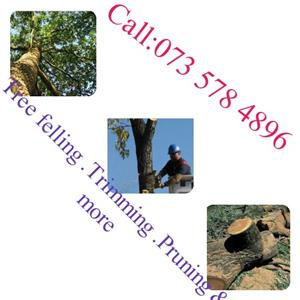 "????Do you have any tree problem???""""""""TREE MASTER:Call 0735784896""""WE HAVE A SOLUTION##"