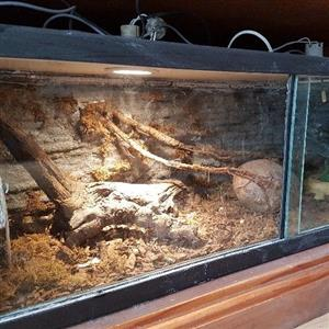 Custom snake tank with decor