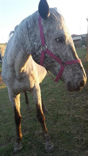 Quality horses for sale