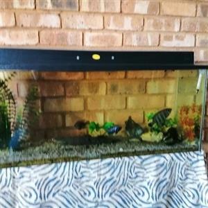 fish tank bargain