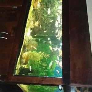 3m fish tank