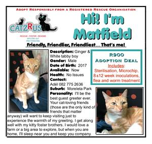 Why this ginger is still waiting for his home is a mystery - he is all round gorgeous! Adopt a cat in Pretoria.