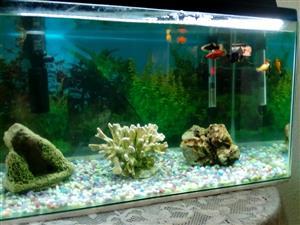 Tank & fish etc for sale (guppies,mollies,bubble fish,babies)