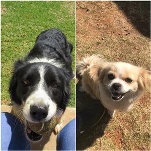 Lovely dogs seeking new home