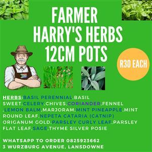 Herbs/Herbs