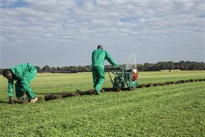 Instant lawn experts and producers of three types of lawn: Kikuyu, LM and Cynodon