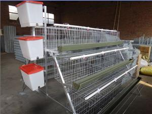 4 tiers battery layer cages