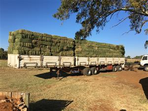 Teff and Lucerne for Sale