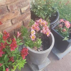 Plants - Pot Plants and Flowers