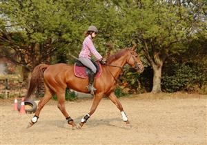 Top Class Thoroughbred Gelding for Sale!