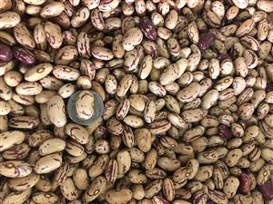 Sugar Beans (Dry Beans) - 50kg Bags