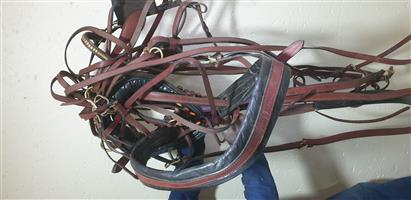 Horse Car Halter and Leads