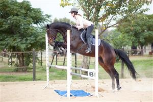 Talented Top Class Thoroughbred Gelding for sale
