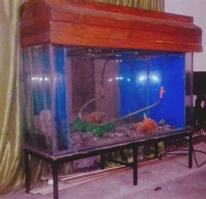 Big fish tank with accesories