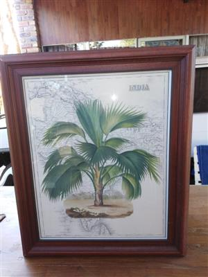 Framed still life print - India Palm