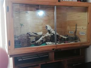 snake cage and acc