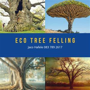 Eco Tree Felling