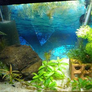 20/25 liter Shrimp Breeding Tank