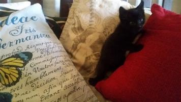 Kittens urgently looking for a new home