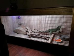Unused Reptile Enclosure