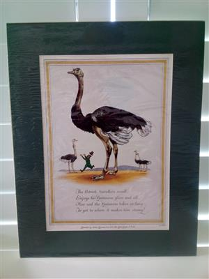 Guinness 'The Ostrich' Genuine Print Circa: 1952 by Artist: Lobban