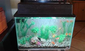 Fish tank for beginners