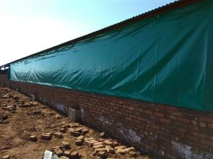 PVC CHICKEN CURTAINS FOR SALE
