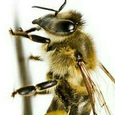 Bee keepers 24 hour, All of Gauteng/Pretoria/Benoni/Boksburg/Brakpan/Honeydew!
