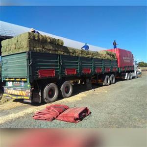 Top Quality Luceren/Alfafa Hay for Animal Feedings