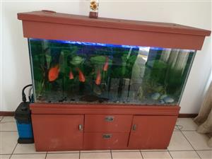 660L Aquarium system and stand plus fish.