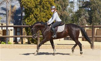 Flashy Thoroughbred Mare for sale!!!