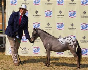 MINIATURE HORSE AUCTION - HART E & GUEST SELLERS INVITE YOU TO AN AUCTION OF ELITE PREMIUM MINIATURE HORSES