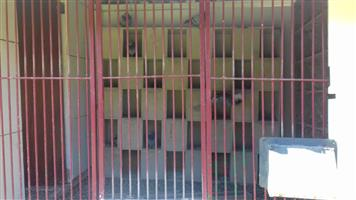 Racing Pigeon Loft for Sale