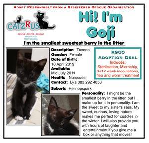 Meet Goji. Another CatzRus rescue kitten. Basic vet care included.
