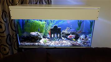 Urgent sale!!! 165L fish tank for sale.