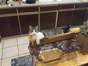 2 Adorable Cats