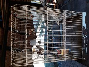 3 birdcages for sale