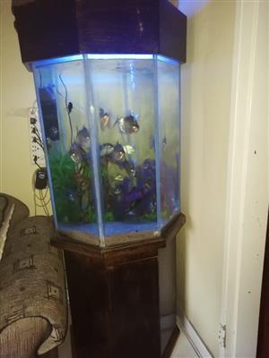 350l fish tank