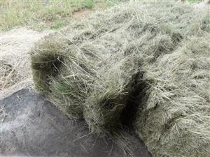 Small BlockBales For Sale