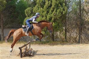 Bombroof Thoroughbred Gelding for sale!!!