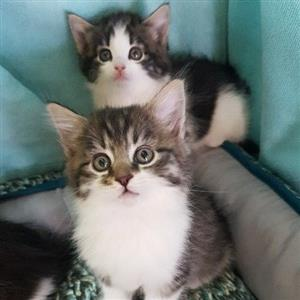 Cats and Kittens in South Africa