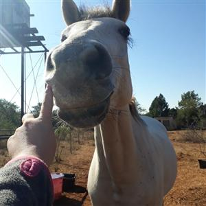 2 Horses for urgent Sale!!!