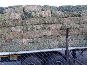 Lucerne  for sale