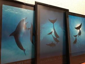 Framed Wall Picture -Dolphin Tales